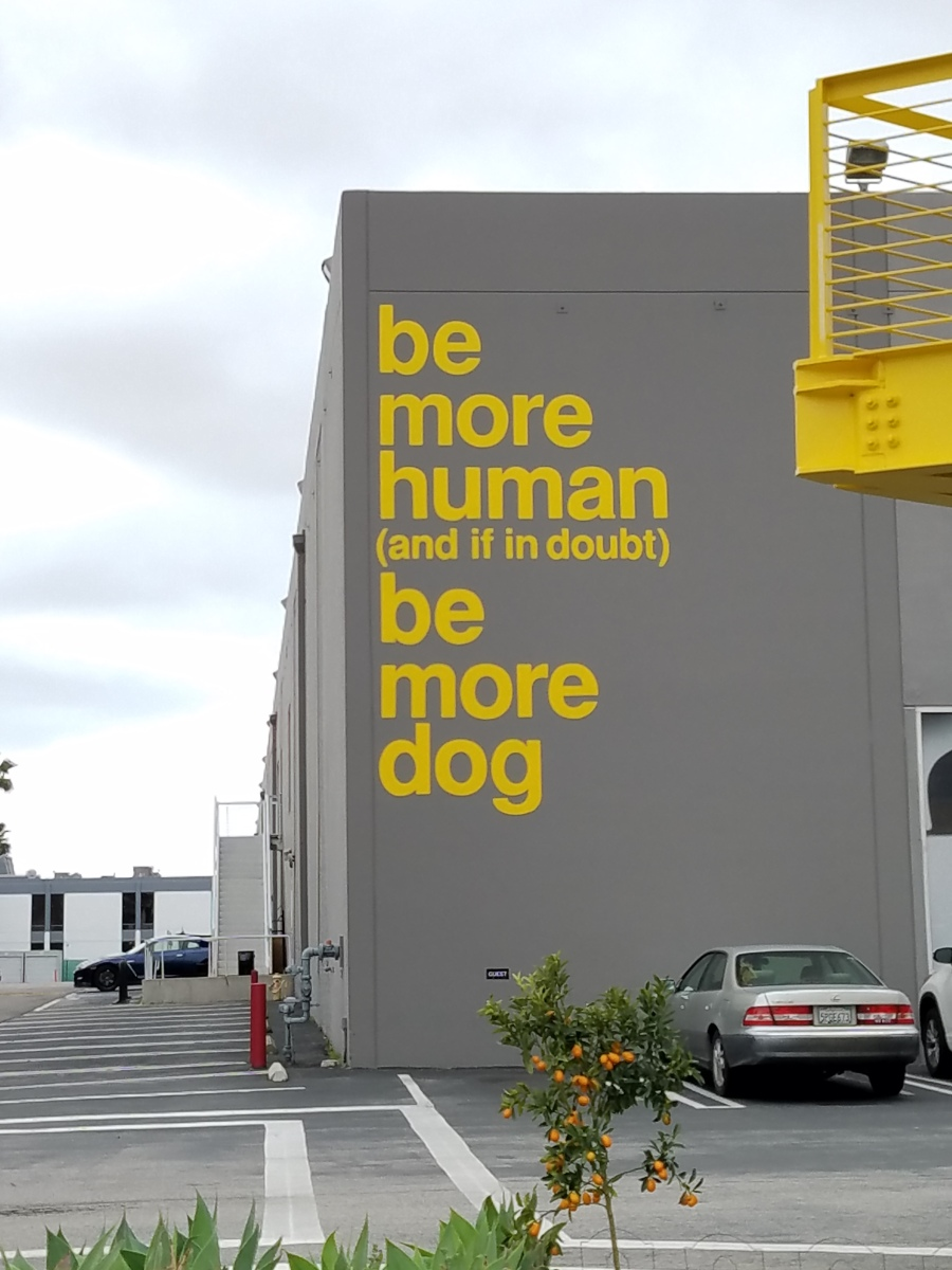 be more human (and if in doubt) be more dog