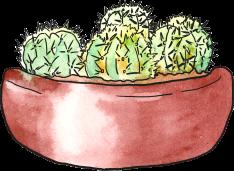 cacti-bowl