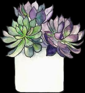 cacti-purple-flower