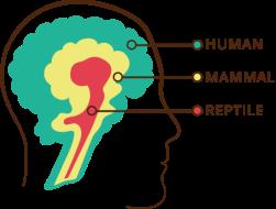 triune-brain-graphic